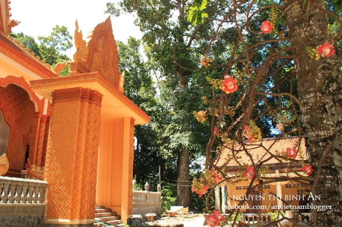 Sanghamangala pagoda - Vinh Long - Vietnam (7)