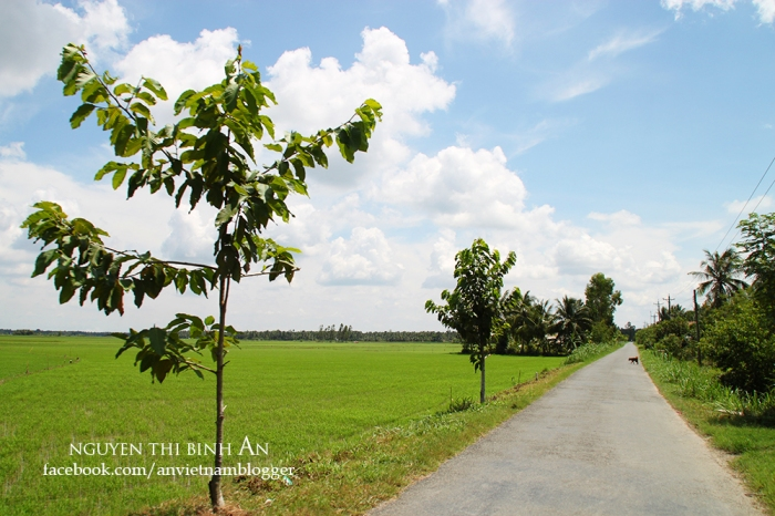 Vinh Long countryside - Vietnam (1)